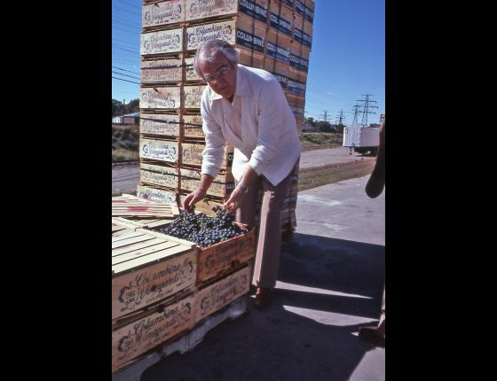 About The California Fresh Fruit Association - Image: 38
